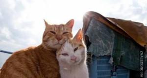 Koty też mają uczucia