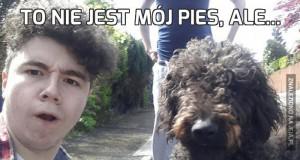 To nie jest mój pies, ale...
