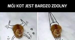 Wszechstronny koteł