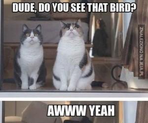 Paczaj na tego ptaka!