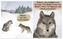 Udomowiliśmy wilki?