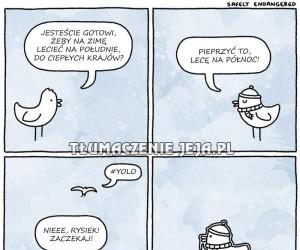 Zbuntowany ptak Rysiek