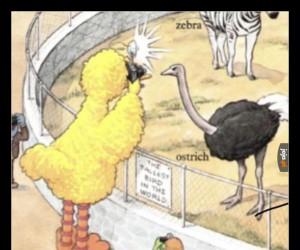 Zimny drań z tego ptaka