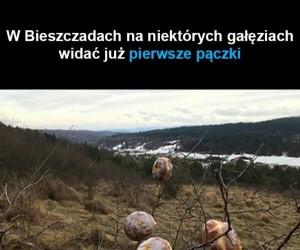 W Bieszczadach pierwsze oznaki wiosny
