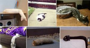 Koty to jednak są dziwne