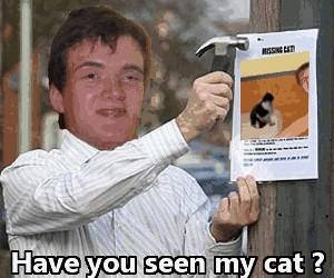 Zaginiony kot