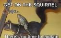 Wskakuj na wiewiórkę, nie ma czasu na wyjaśnienia...