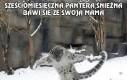 Duże koty lubią śnieg