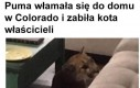 Podmianka kota