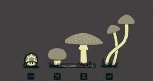 Poznaj grzyby