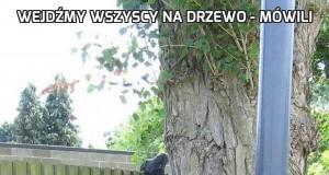 Wejdźmy wszyscy na drzewo - mówili