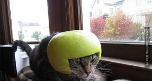 Koty, które jeszcze się zemszczą...