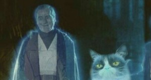 Jako duch mocy grumpy cat wyszkoli niejednego Jedi