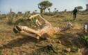 Moja żyrafa chyba się zepsuła