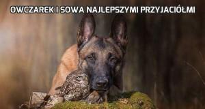 Owczarek i sowa najlepszymi przyjaciółmi