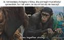 My małpy, my głupie małpy