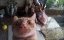 Bardzo zdziwiony kotek