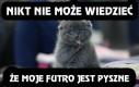 A co jeśli koty liżą swoje futro bo jest po prostu pyszne?