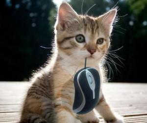 Mam myszkę!