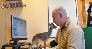 Nie warto denerwować dzikich zwierząt