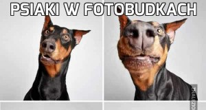 Psiaki w fotobudkach
