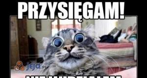 Podejrzane oczy masz, koteł!