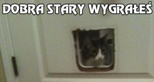 Nie zakładaj się z kotem