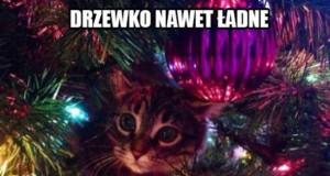 Kotek polubił Twoje drzewko