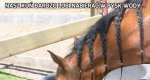 Nasz koń bardzo lubi nabierać w pysk wody...