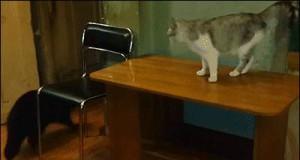 Atak na kota - robisz to źle