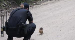 Jak to ku*wa zatrzymany...?