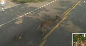 Bambi? Bambi, nieeeeeee!