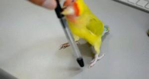 Fajny ten długopis!