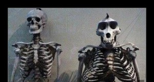 Porównanie szkieletu człowieka i goryla
