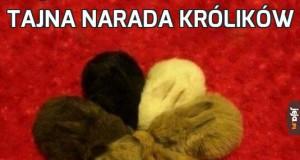 Tajna narada królików
