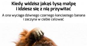 Najdziwniejsza małpa ever