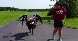 Spiderdonkey