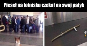 Pieseł na lotnisku