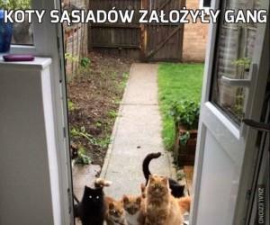 Koty sąsiadów założyły gang