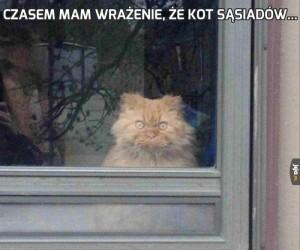 Czasem mam wrażenie, że kot sąsiadów...