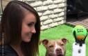 Jak zmusić psa to pozowania
