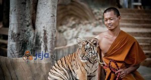 Tygrysy to po prostu duże kociaki