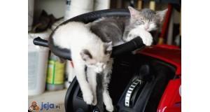 Koty na kierownicy