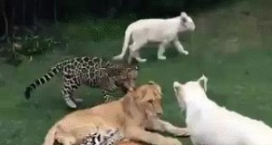 Po prostu kociaki