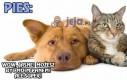 Podstawowa różnica między psami i kotami