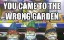 Trafiłeś do złego ogrodu