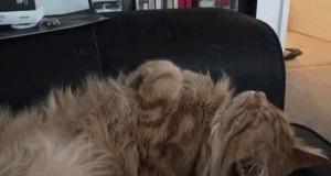 Koty mają taki jeden przycisk...