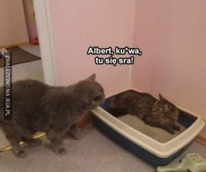 Eh, Albert. Znowu?