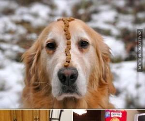 Psy o niespotykanie silnej woli