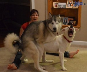 Barney Stinson i jego pies